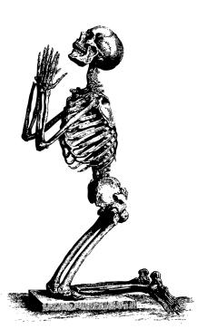 mlf-skeleton-pd-05-kj0022.jpg