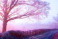 tree_200.jpg
