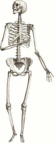 sincere skeleton