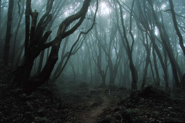 haunted-woods.jpg
